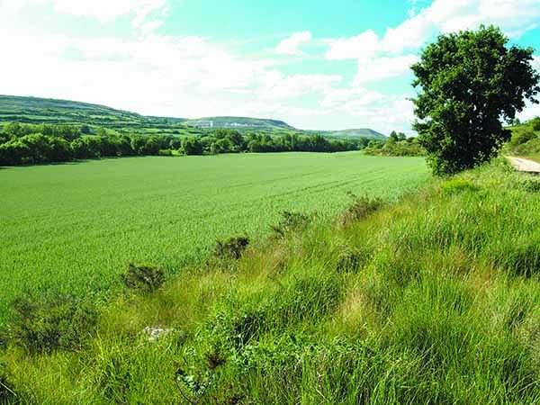 Campos de cereal, en el Valle del río Úrbel.