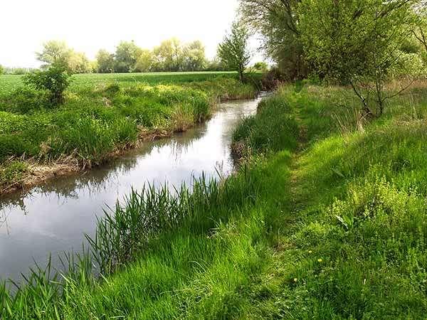 El río, a la altura de Vivar del Cid, cerca ya de su desembocadura en el Arlanzón.