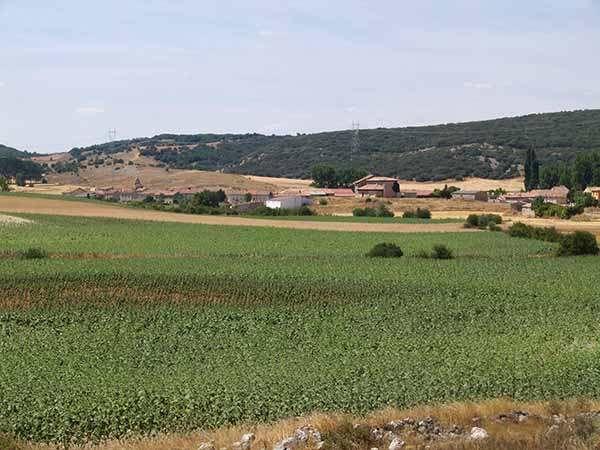 Parte del gran encinar que se extiende por la zona, detrás del casco urbano de Temiño.