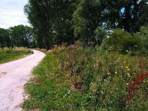 Vegetación que prolifera junto a las riberas del río Vena, a la altura de Rubena.
